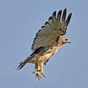 Ken Skyhawk Flaton Profile